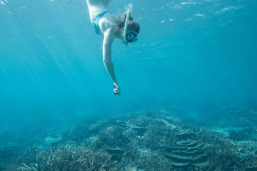 LADY ELLIOT ISLAND, AUSTRALIA - APRIL 12:  Annette Edmondson of Australia swims to view coral during an athlete Great Barrier Reef experience on day eight of the Gold Coast 2018 Commonwealth Games at the Great Barrier Reef on April 12, 2018 on Lady Elliot Island, Australia.  (Photo by Mark Kolbe/Getty Images for Tourism Queensland)