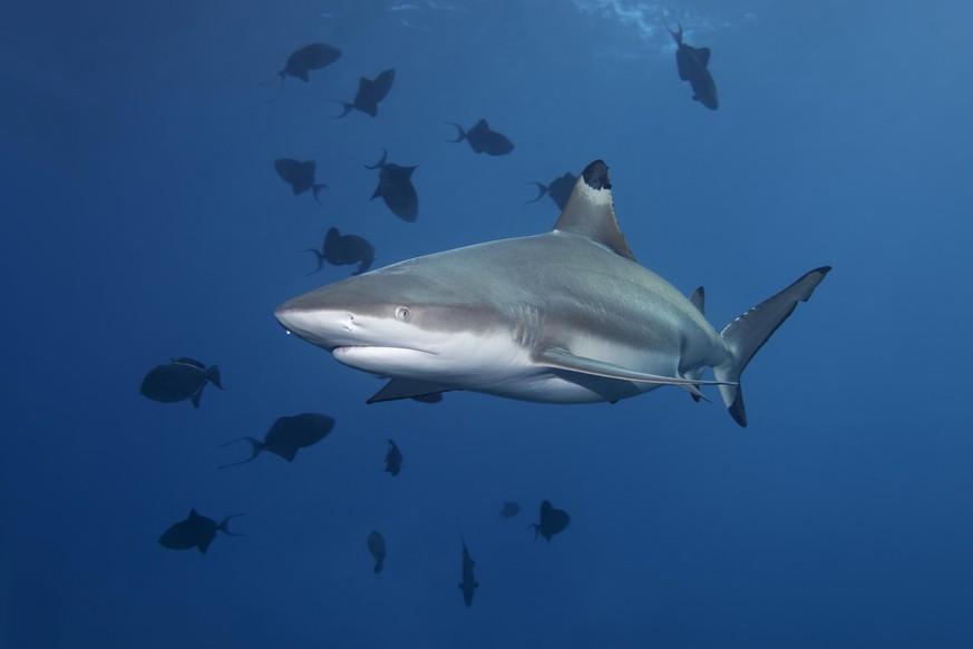 Hai frisst kleinen Hai im Zoo – vor den Augen der Besucher