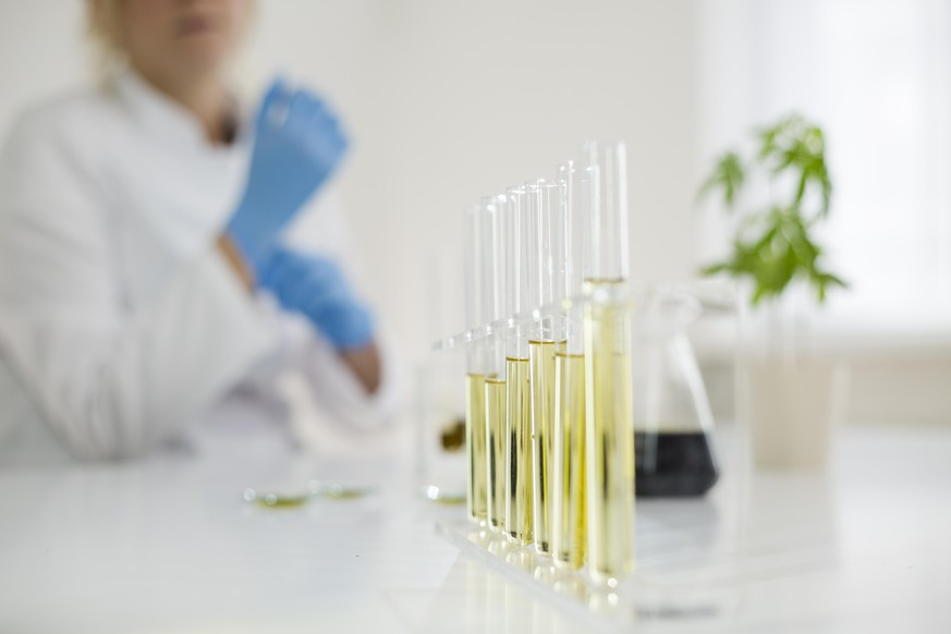 Female scientist in a laboratory working with cbd oil extracted from a medical marijuana plant. She is checking the marijuana plant. Healthcare pharmacy from medical cannabis.