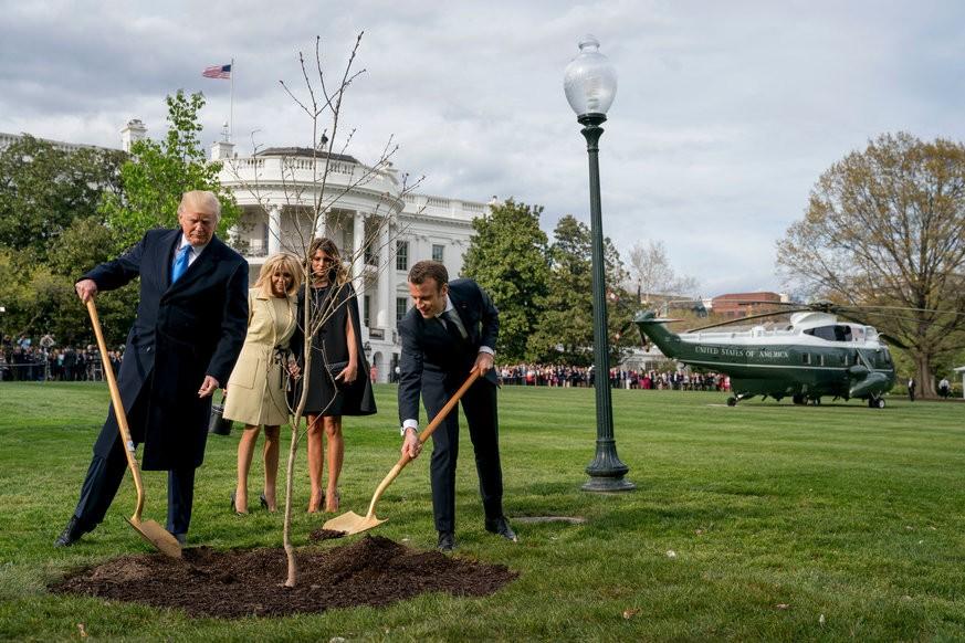 Symbol für Zusammenarbeit - Von Trump und Macron gepflanzte Eiche ist tot