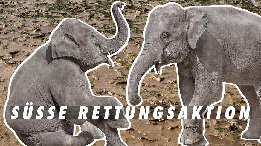 Elefantenbaby aus der Schlammgrube befreit – von Elefanten