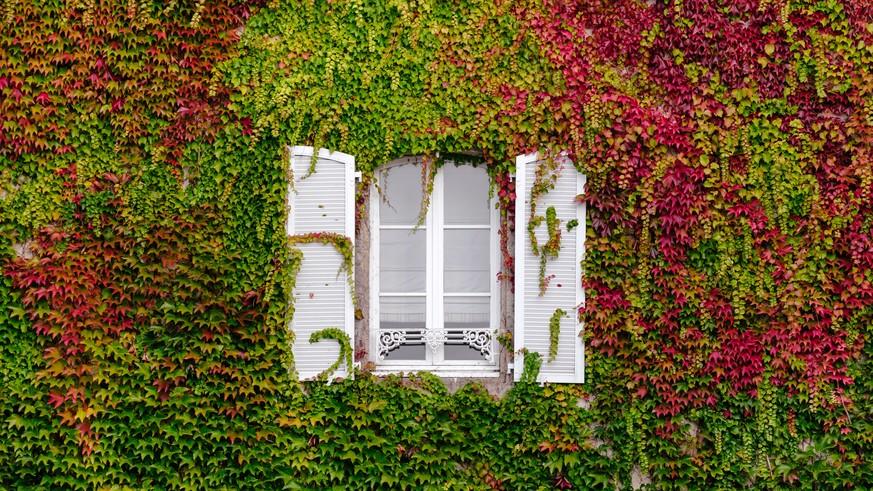 Pflegeleichte Pflanzen: Diese Balkonpflanzen Kriegst Du