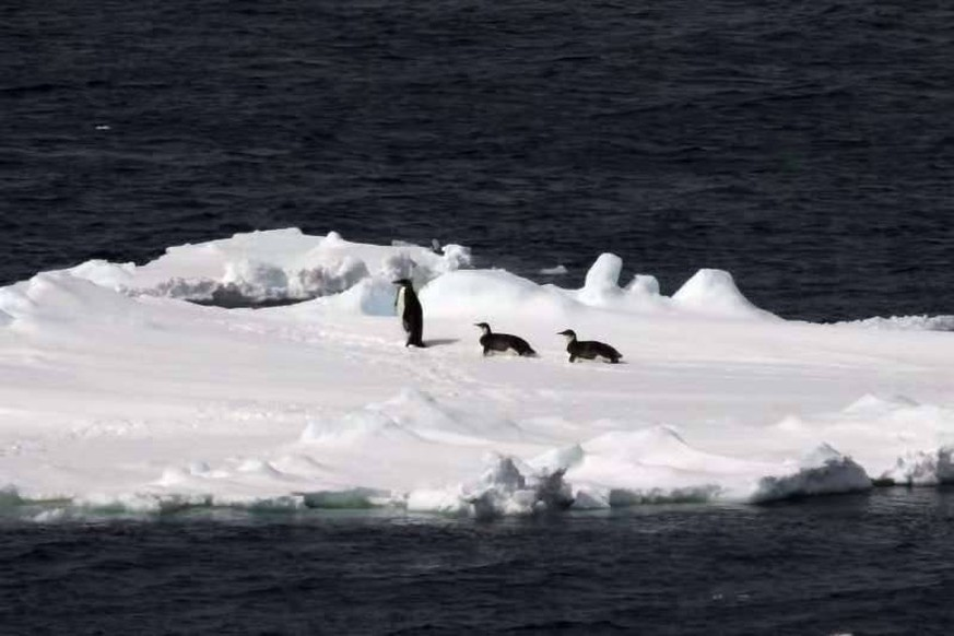 (181125) -- ABOARD XUELONG, Nov. 25, 2018 -- Floating ice and emperor penguins are seen in the Southern Ocean, Nov. 25, 2018. Xuelong entered a floating ice area in the Southern Ocean to avoid a cyclone. The ice area is located at 61.55 degrees south latitude and 110.37 east longitude. )(wsw) CHINA-ICEBREAKER XUELONG-FLOATING ICE AREA-ENTERING LiuxShiping PUBLICATIONxNOTxINxCHN