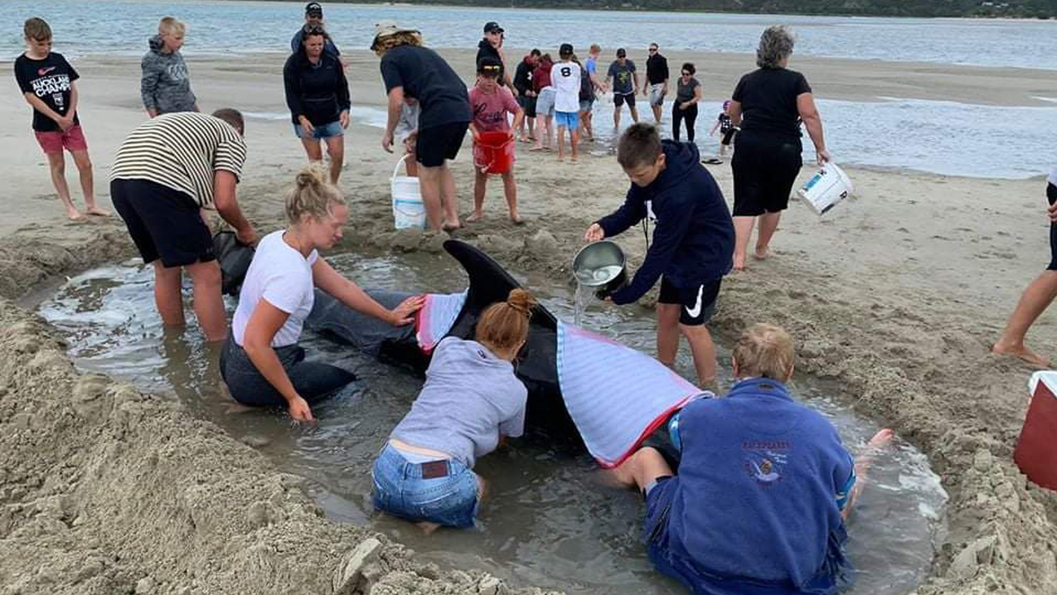 Spontaner Einsatz hunderter Helfer: 7 gestrandete Wale in Neuseeland gerettet