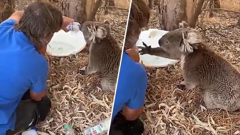 Koala bedankt sich für Wasser: 11 berührende Geschichten aus Australien