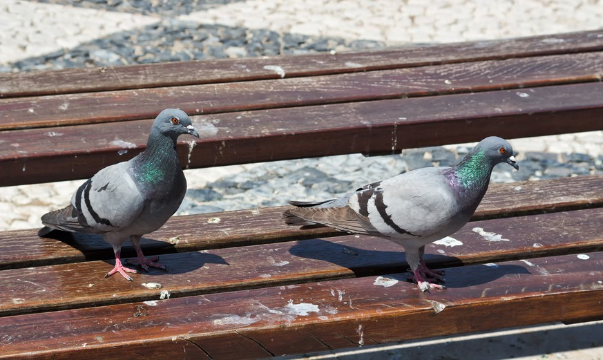 Two pigeons look around on a dirty park bench.