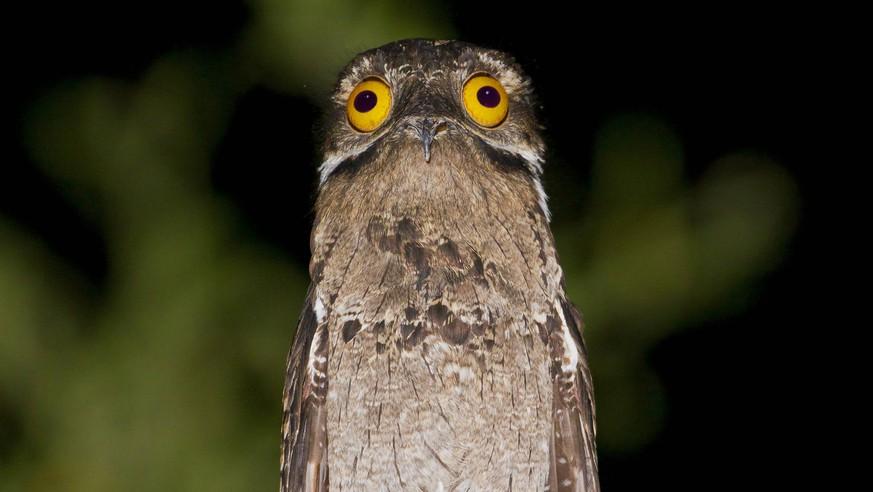 Die ungewöhnlichsten Tierarten, von denen du noch nie gehört hast