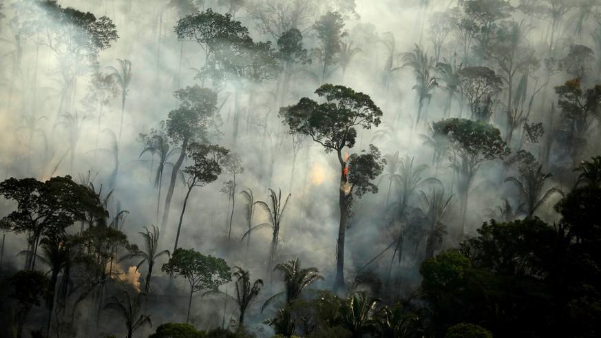 Studie: Regenwald-Abholzung lässt CO2-Emissionen in Brasilien steigen