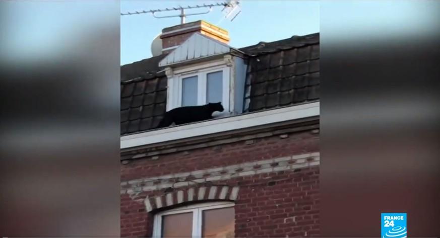 Nein, das ist KEINE große schwarze Katze – naja gut, irgendwie schon