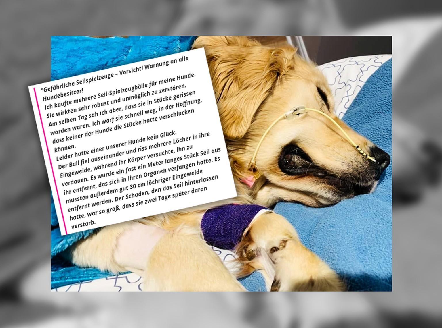 Hund Nach Tod Von Golden Retriever Spricht Hunde Besitzerin