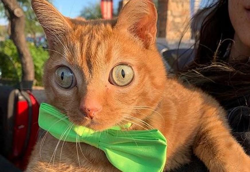 """Dieser Kater hat """"crazy eyes"""" – und mehr Instagram-Follower als du!"""