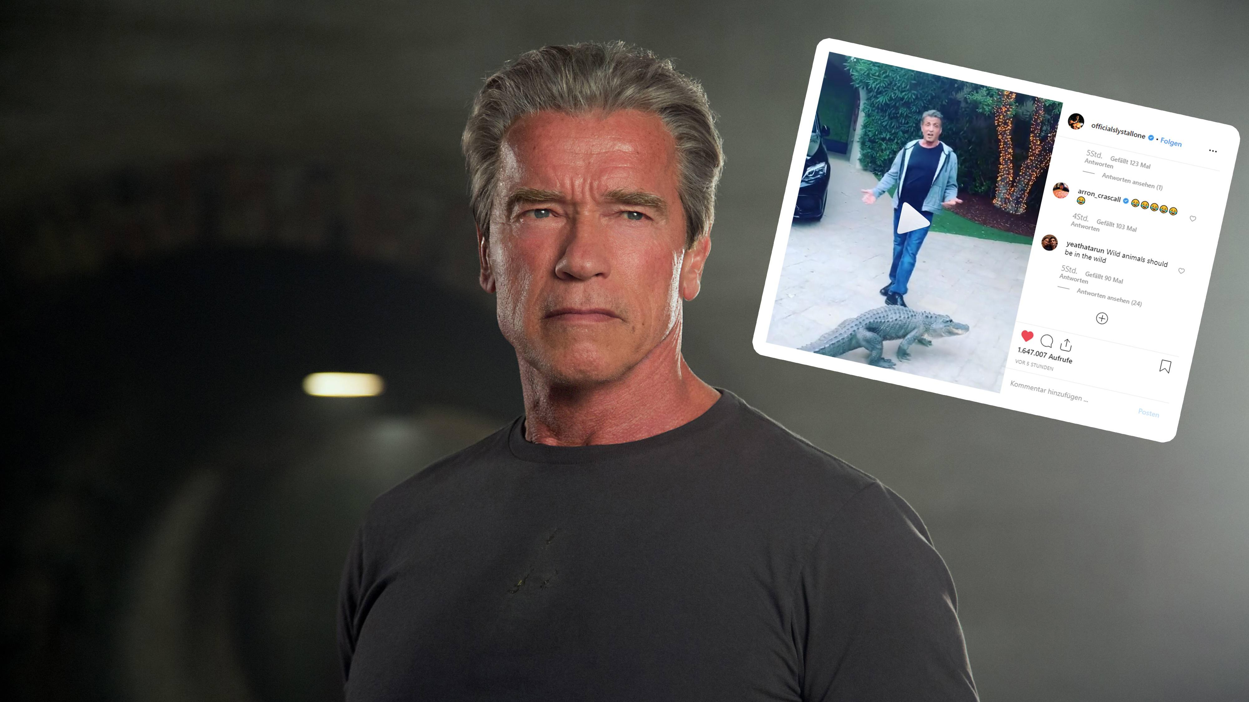 """Stallone besorgt: Hat dieser Alligator den """"Terminator"""" gefressen?"""