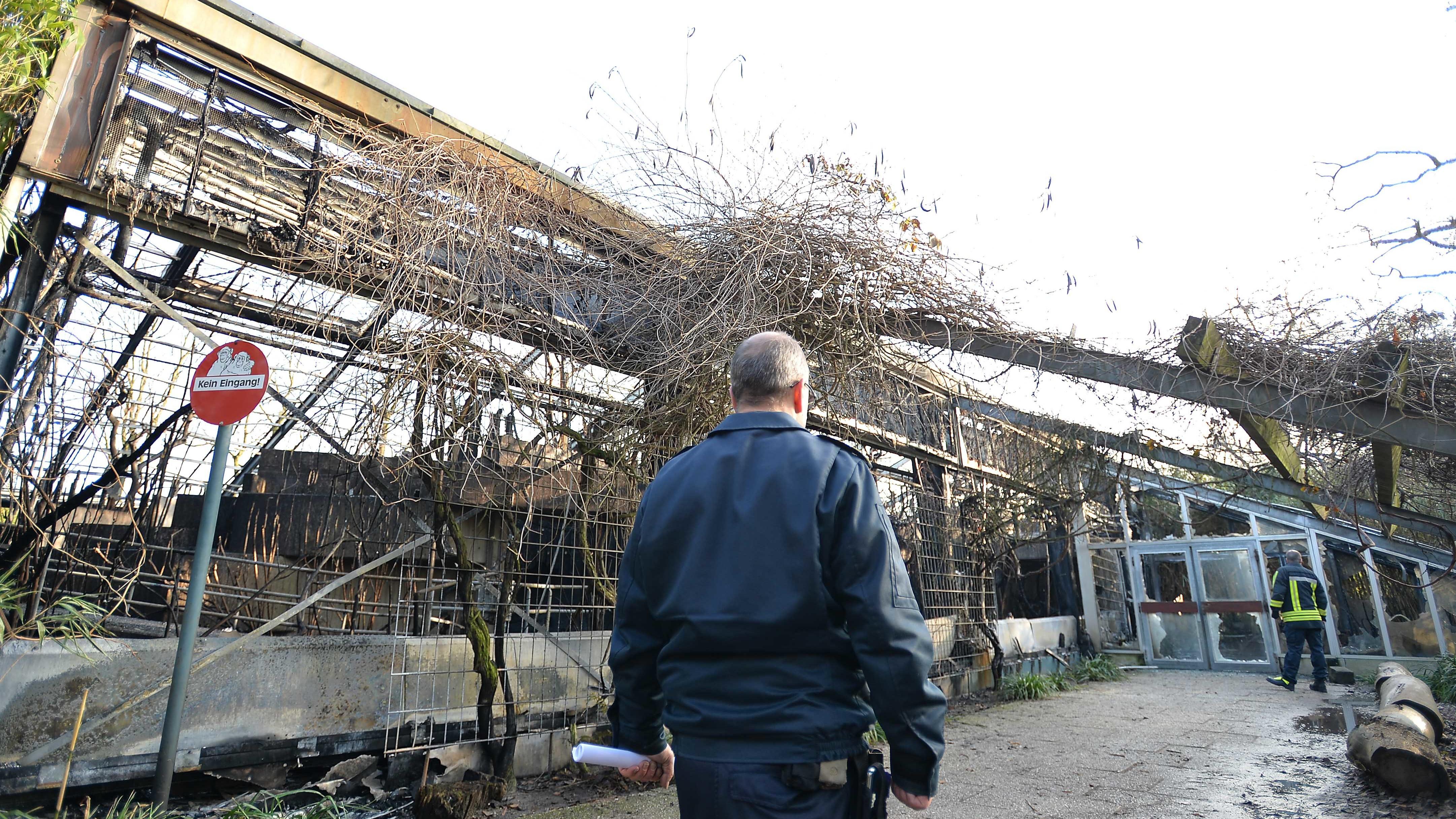 Brand im Affenhaus des Krefelder Zoos: Polizei identifiziert mutmaßliche Verursacher