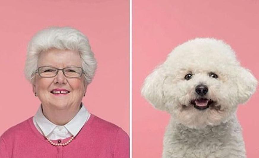Instagram 6 Hunde Die So Aussehen Wie Ihre Herrchen Watson