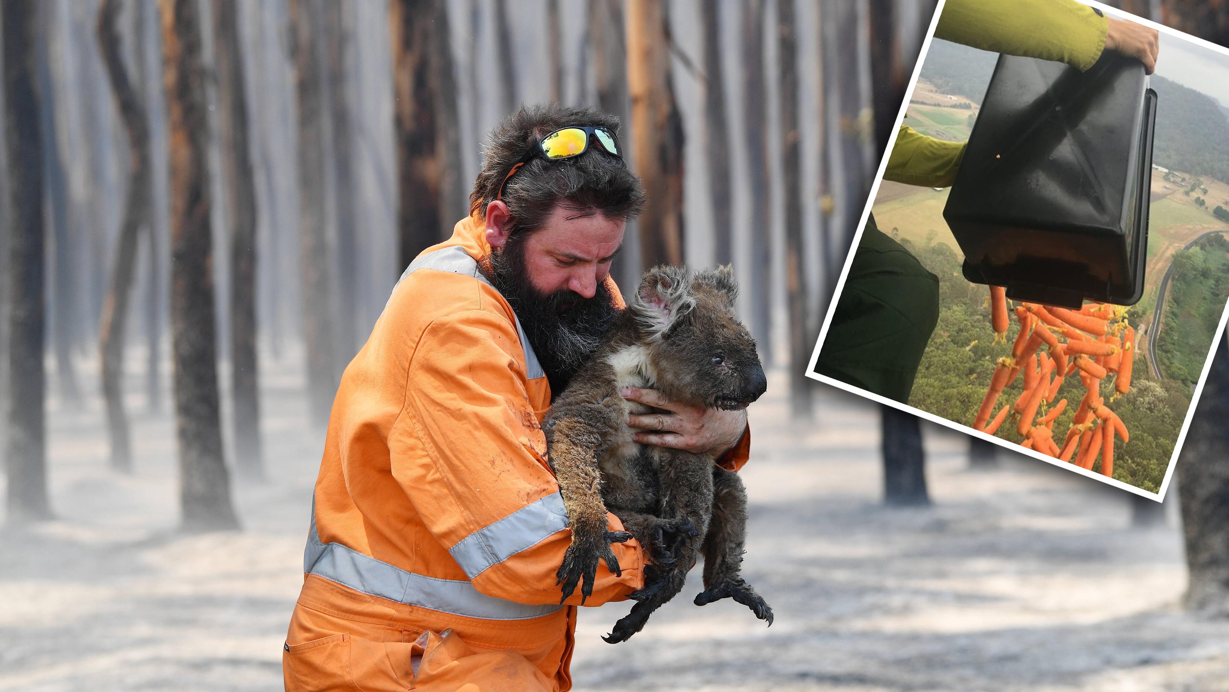 So hilft die australische Regierung den leidenden Tieren