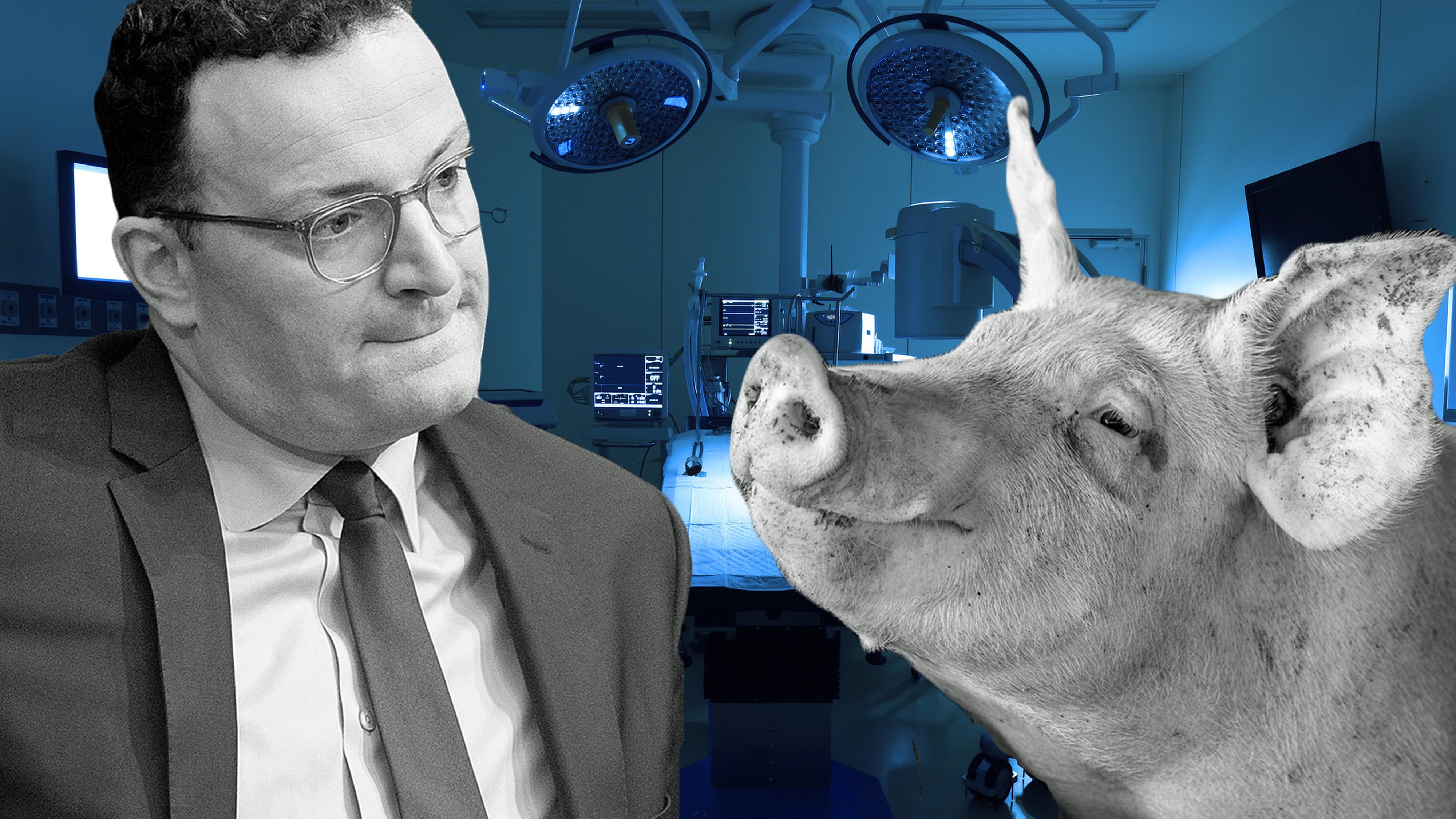 """""""Schweineherzen können Leben retten"""""""