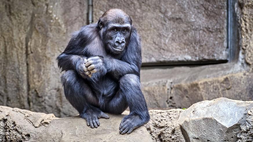 Leere Zoos wegen Corona: Pfleger beobachten interessante Veränderung bei Tieren