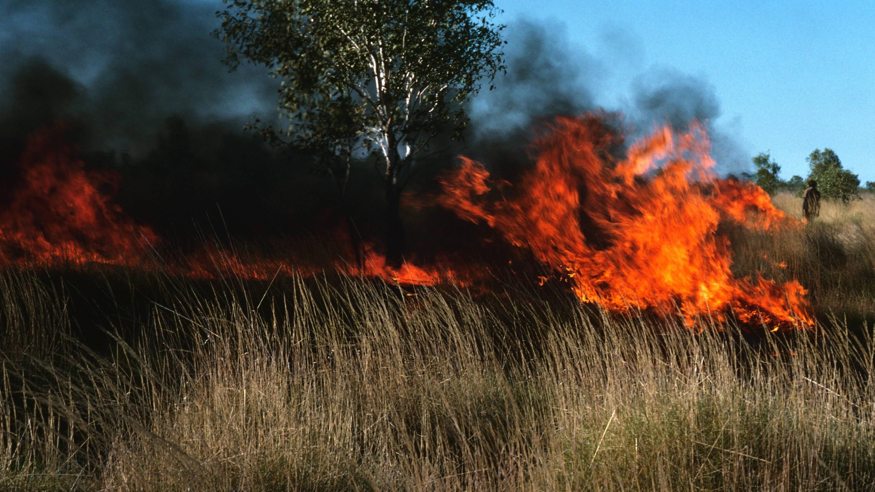 Feuer gegen Feuer: Australiens Ureinwohner kennen ein Geheimnis