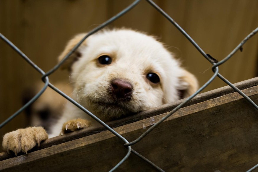 Little puppy dog, loking at the camera behing the wire fence, in a shelter adoption.