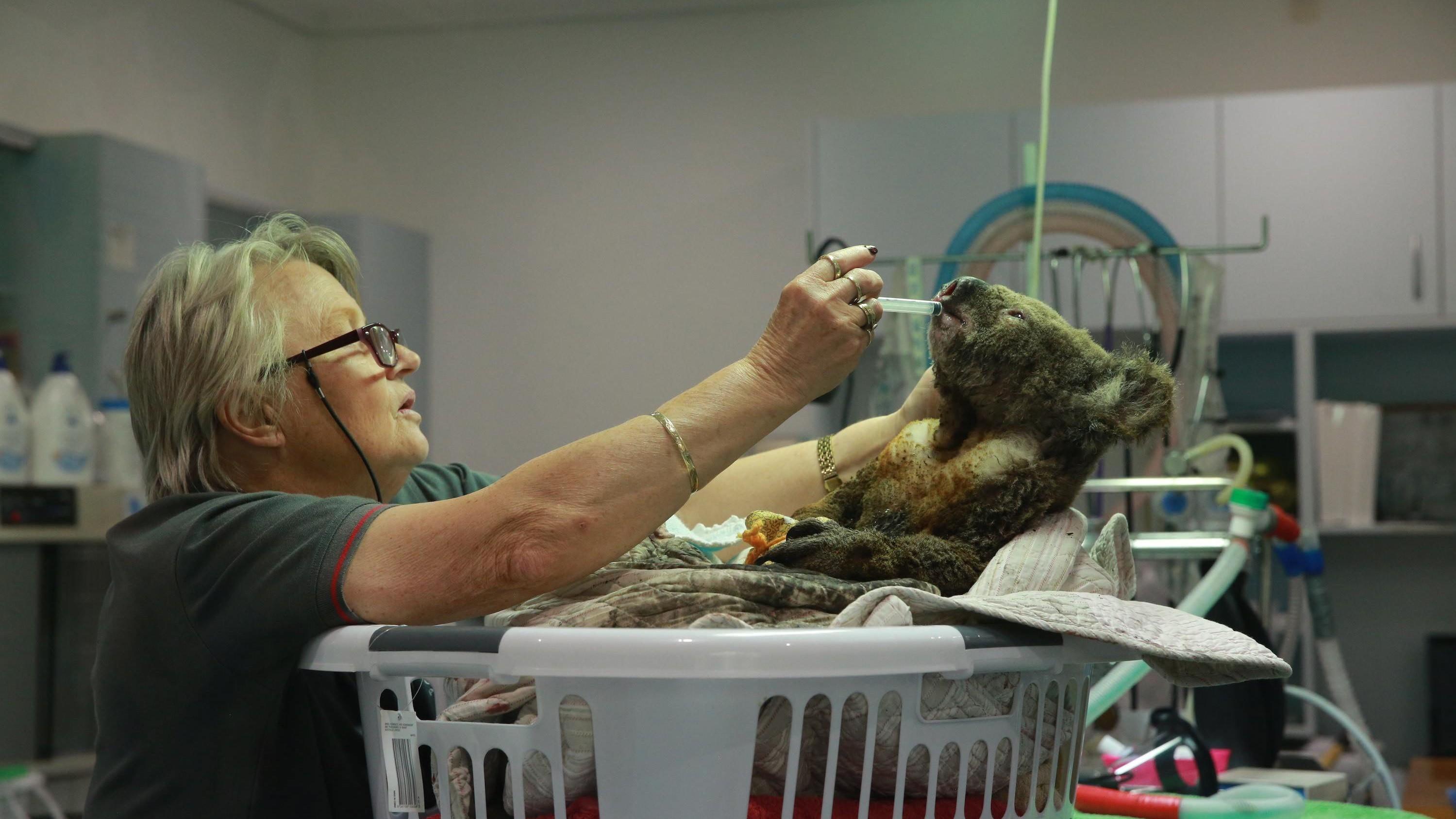 Australiens gerettete Tiere: 10 herzergreifende Geschichten
