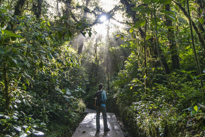 Kaffeeabfälle für Regenwald