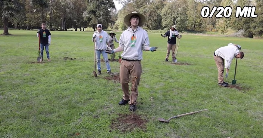 bäume pflanzen spenden