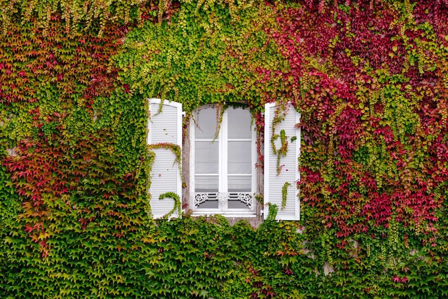 Pflegeleichte Pflanzen Diese Balkonpflanzen Kriegst Du Nicht Kaputt