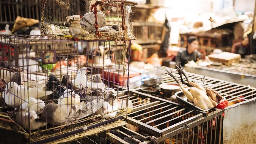 Über 500 Neuzugänge: China erweitert Liste der geschützten Tiere