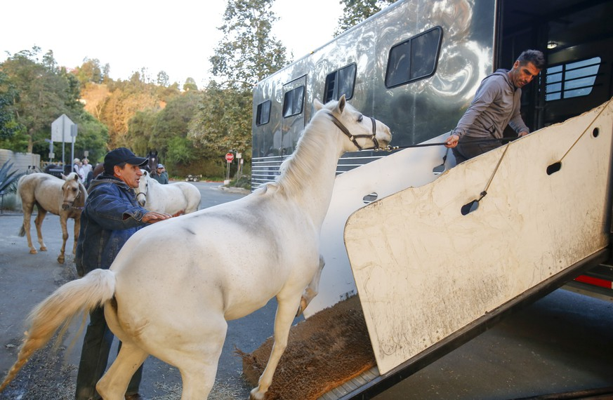 Horses are evacuated near the Getty Fire area in Brentwood, Calif., Monday, Oct. 28, 2019. Fire conditions statewide have made California a
