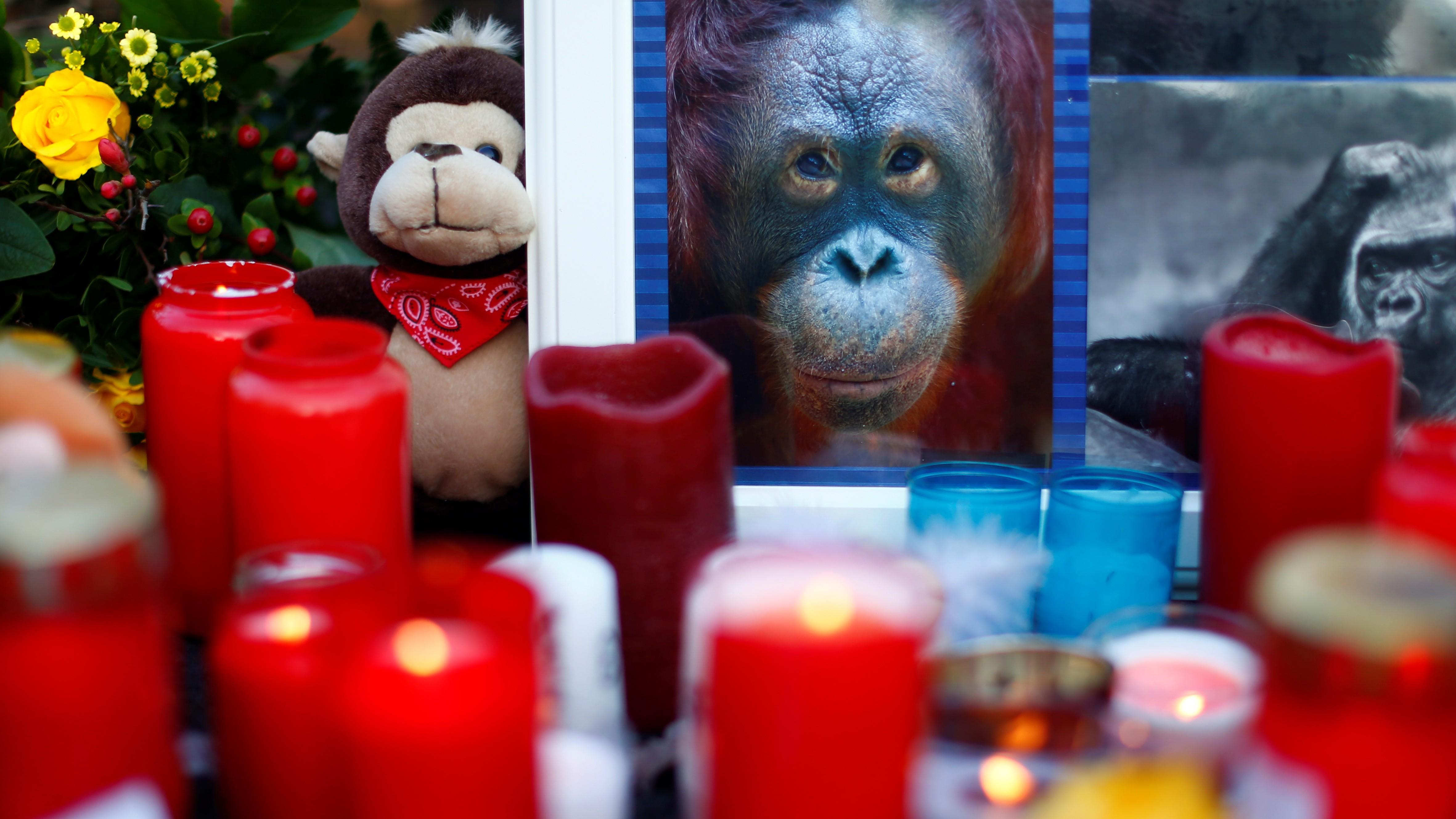 """Zoo Krefeld nach Brand wieder geöffnet: """"Ich hoffe, sie sind im Affenhimmel"""""""