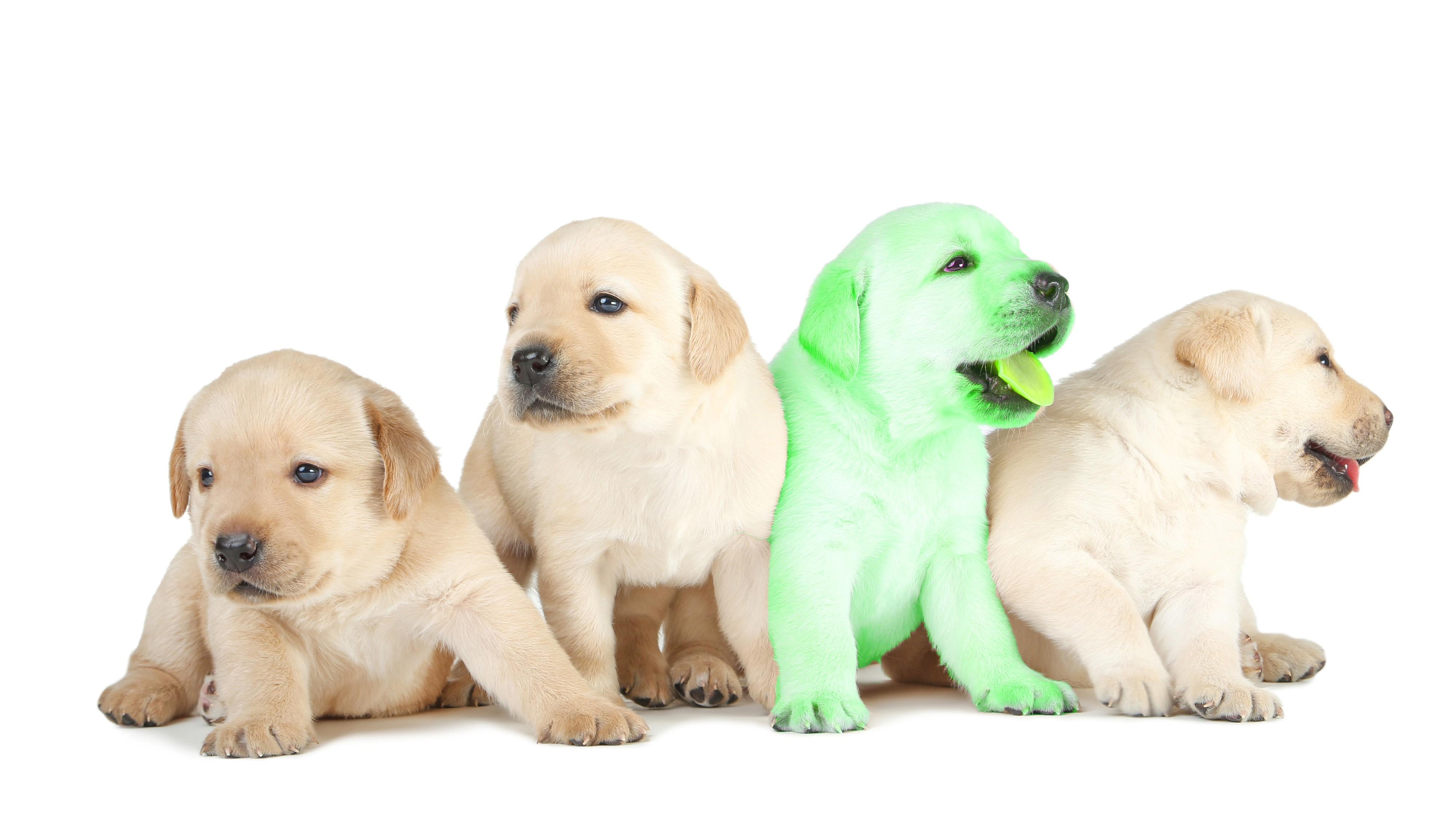 Grüner Hund in USA geboren – ratet mal, wie er heißt