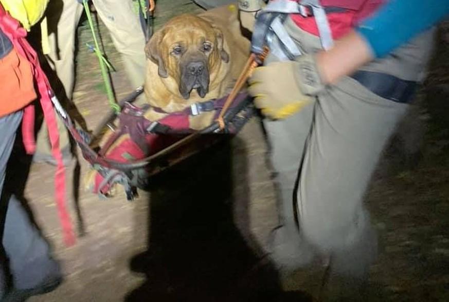 90-Kilo-Hund verletzt sich beim Wandern – bei seiner Rettung ist er ganz tapfer <3