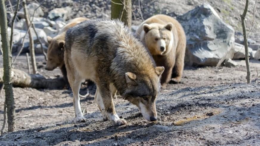 Alternativer Wolf- und Bärenpark nimmt Tiere aus schlechter Haltung auf