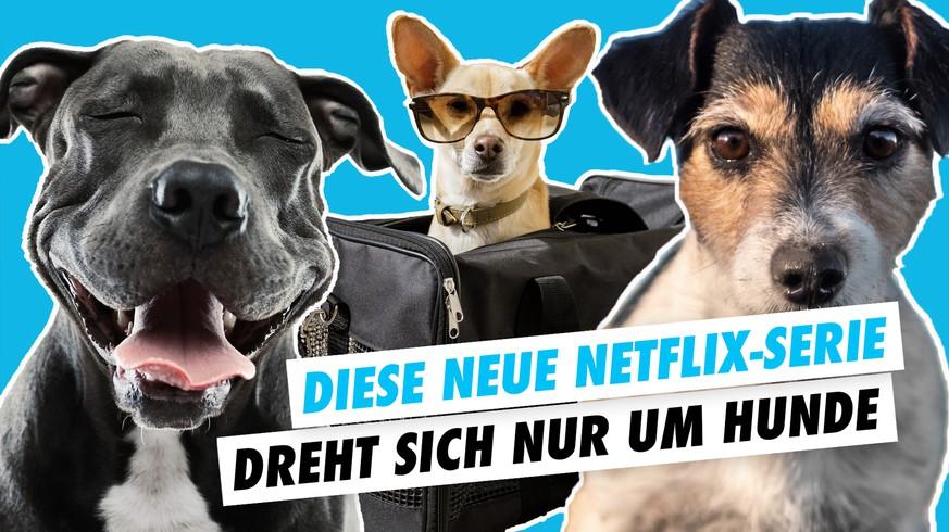 Hunde Serie