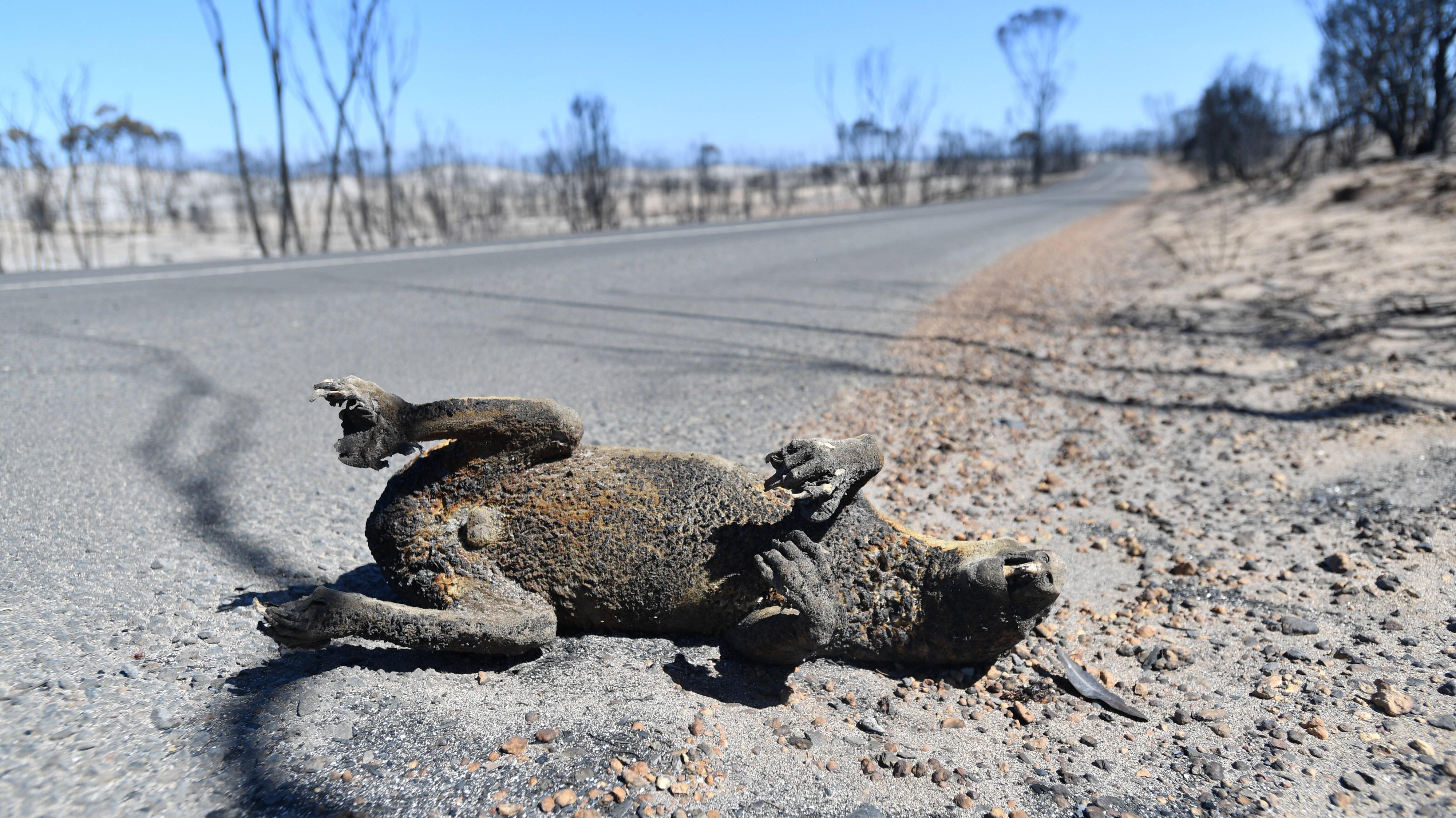 Feuer in Australien: 480 Millionen tote Tiere? Jetzt kommen Zweifel an Zahl auf
