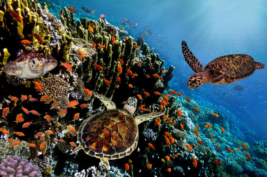 Colorful coral reef with many fishes and sea turtles